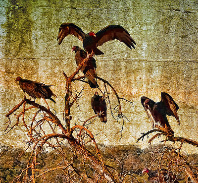 Art Print featuring the photograph Pleasanton Vultures by Steve Siri