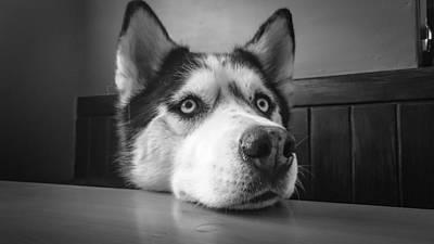Funny Dog Digital Art - Please by Cco