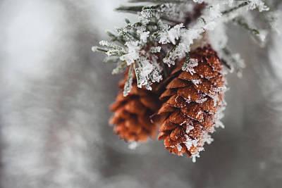 Photograph - Please Keep Me Warm by Yvette Van Teeffelen