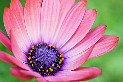 Photograph - Pleasing Petals by Morgan Wright
