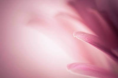 Photograph - Pleasingly Pink by Peter Scott