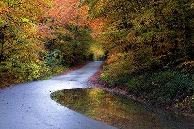 Photograph - Plitvice Forest by Rene Pronk