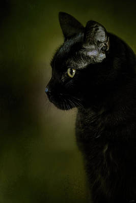 Domestic Short Hair Cat Photograph - Plotting The Next Move by Jai Johnson