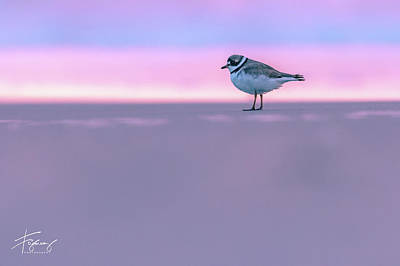 Photograph - Plover At Sunrise by Francisco Gomez