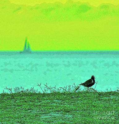 Photograph - Plover In The Grass by Craig Wood