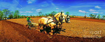 Photograph - Plow Days Freeport  Il Draft Horses  by Tom Jelen