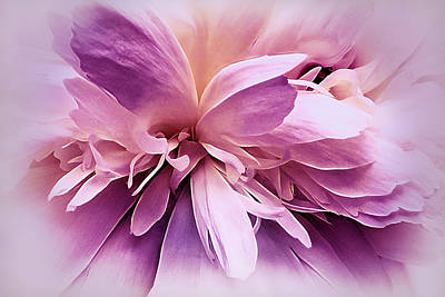 Photograph - Plum Ballet Powder Puff by Darlene Kwiatkowski
