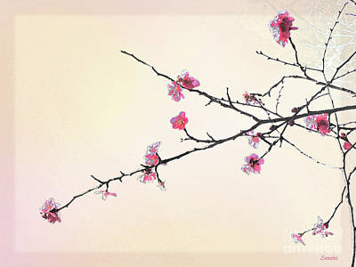 Photograph - Plum Blossom by Eena Bo