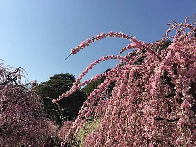 Photograph - Plum Blossoms by Ann Yamagishi