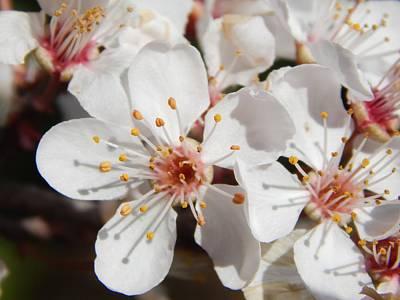 Modern Kitchen - Plum Blossoms by Glen Faxon