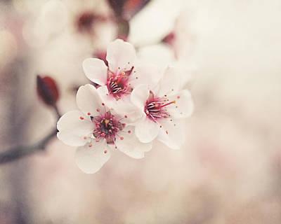 Dappled Light Photograph - Plum Blossoms by Lisa Russo