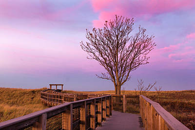 Photograph - Plum Island Boardwalk With Tree by Betty Denise