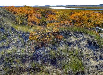 Photograph - Plum Island Sand Dunes by Anne Sands