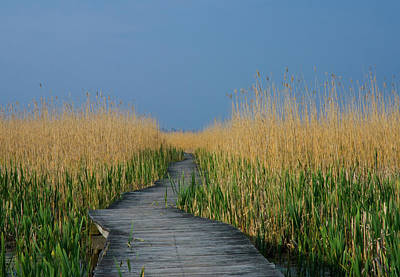 Photograph - Plum Island by Paul Mangold