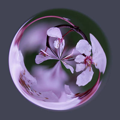 Art Print featuring the photograph Plum Tree Orb by Bill Barber