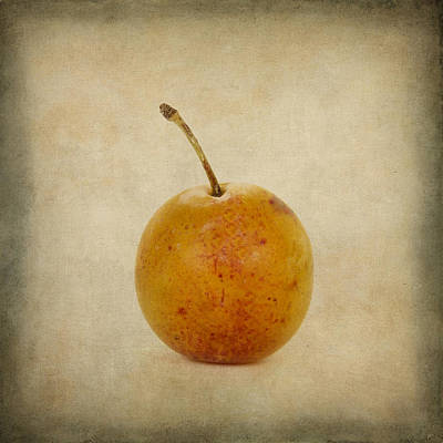 Plum Vintage Look Print by Bernard Jaubert