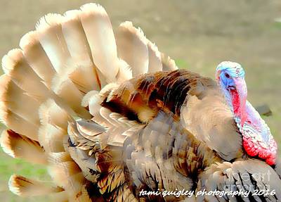 Photograph - Plumage On Parade  by Tami Quigley