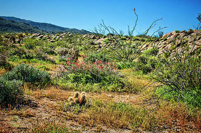 Photograph - Plumb Creek Cactus Garden by Daniel Hebard