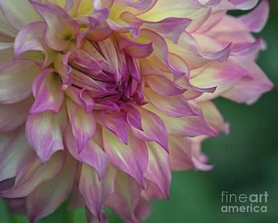 Photograph - Plumb Petals by Patricia Strand