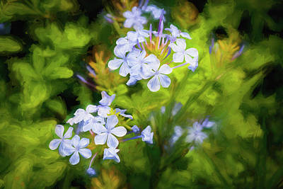 Photograph - Plumbago Auriculata Painted 004 by Rich Franco