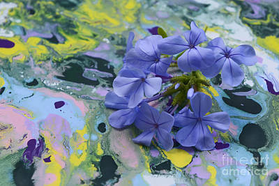Photograph - Plumbago Flowers by Olga Hamilton