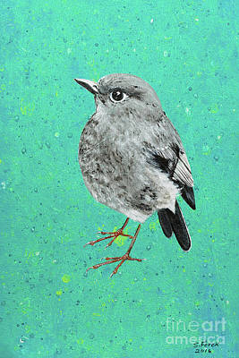 Painting - Plumbeous Water Redstart by Stefanie Forck