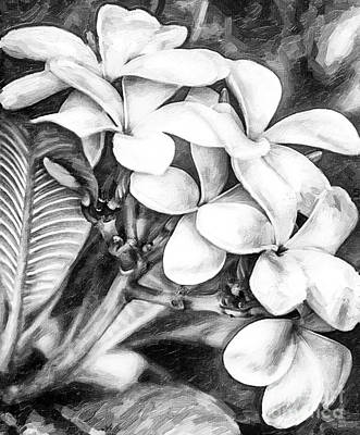 Mixed Media - Plumeria Black And White by David Millenheft