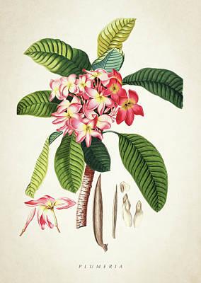 Botanical Digital Art - Plumeria Botanical Print by Aged Pixel