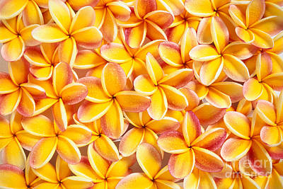 Bed Spread Photograph - Plumeria Flowers by Kyle Rothenborg - Printscapes