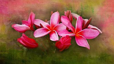 Photograph - Plumeria In Pink by Kasandra Sproson