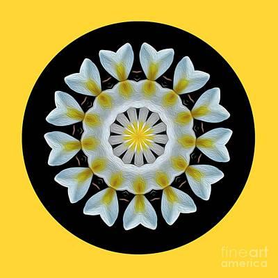 Photograph - Plumeria Mandala By Kaye Menner by Kaye Menner