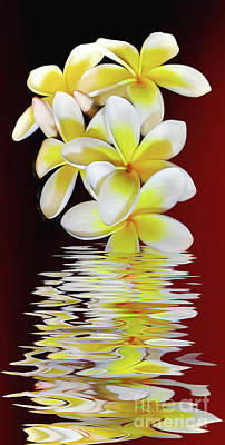 Reflection On Pond Photograph - Plumeria Reflections By Kaye Menner by Kaye Menner