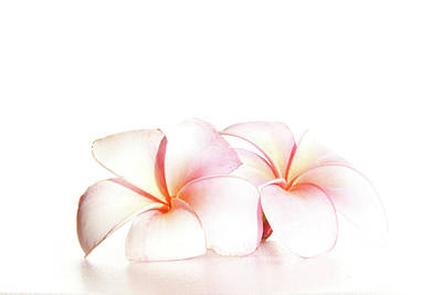 Art Print featuring the photograph Plumeria by Roger Mullenhour