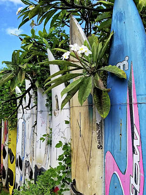Photograph - Plumeria Surf Boards by Michael Yeager