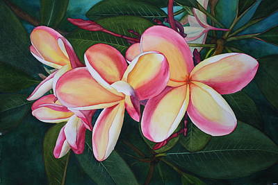 Hawaiian Flower Painting - Plumeria Trio by Tina  Sander