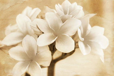 Photograph - Plumerias In Cream And Brown by Jade Moon