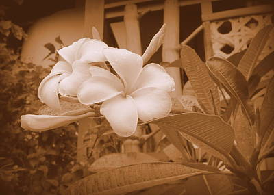 Photograph - Plumerias In Sepia by Kay Novy