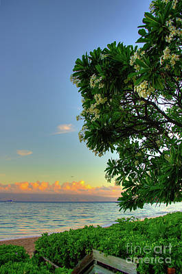 Photograph - Plumerias Kaanapali by Kelly Wade