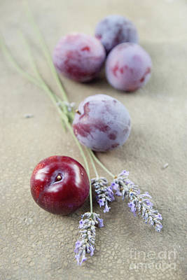 Photograph - Plums And Lavender by Cindy Garber Iverson