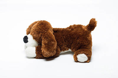Photograph - Plush Toy Dog by Benny Marty