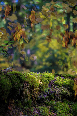 Photograph - Plushy Fall by Patricia Dennis