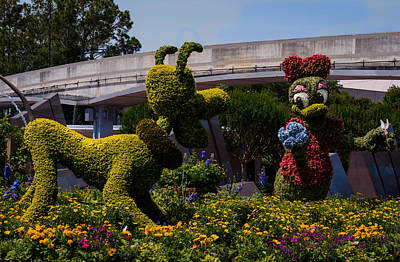 Daisies Photograph - Pluto And Daisy by Zina Stromberg