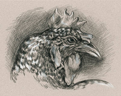 Drawing - Plymouth Barred Rock Chicken Portrait by MM Anderson