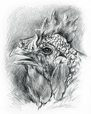 Drawing - Plymouth Barred Rock Hen In Charcoal by MM Anderson