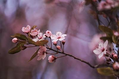 Photograph - Pnw Blossoms by Lynn Hopwood