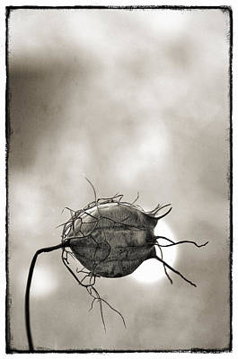 Love In A Mist Art Print by Robert Brown