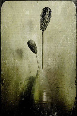 Photograph - Pods In A Vase by Jill Smith