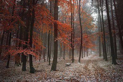 Photograph - Poem Of Autumn Forest by Jenny Rainbow