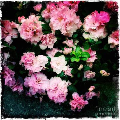 Photograph - Poetry In Pink And Green - Spring Flowers by Miriam Danar