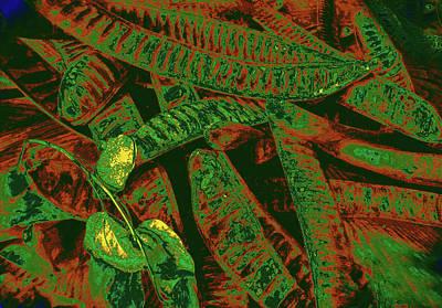 Minimalist Movie Quotes - Poinciana Seed Pods 11 by Gary Bartoloni